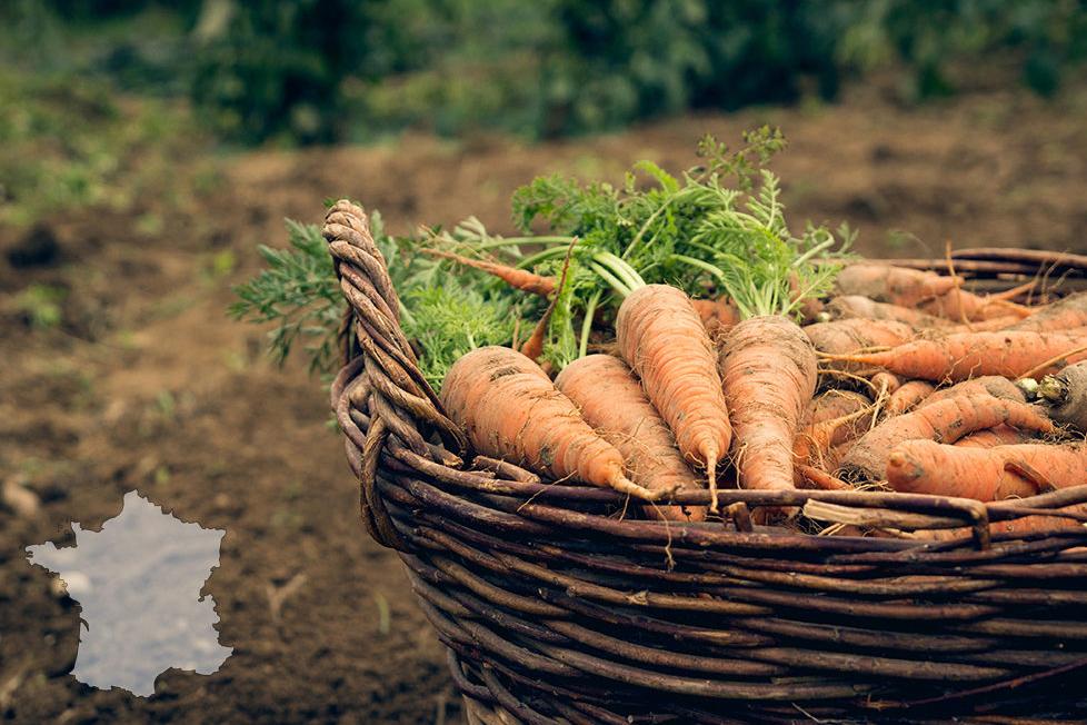carrots-france-copy-978x685