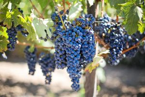 grapes-553464_1920-vs2